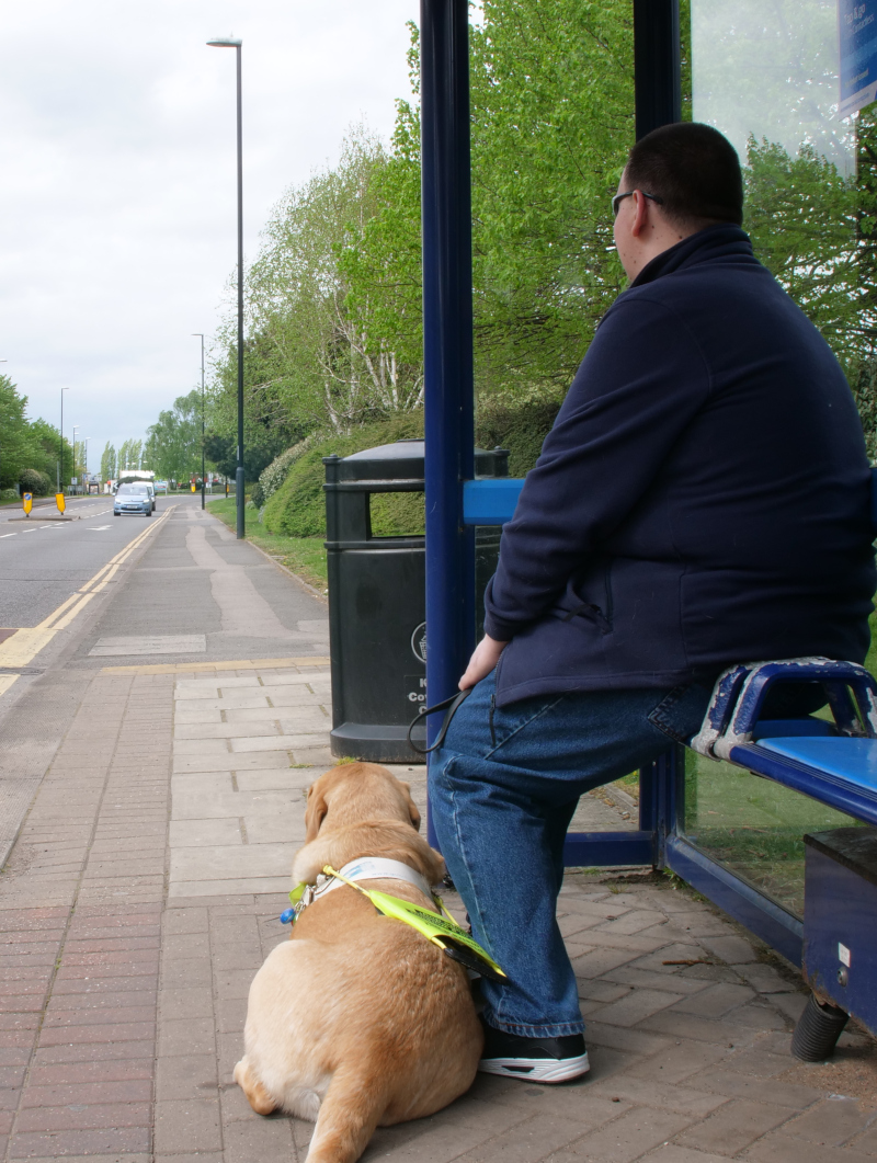 A young man and his guide dog sit at a bus stop