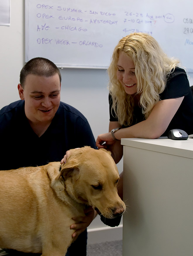 A smiling man and woman in an office stroking a dog